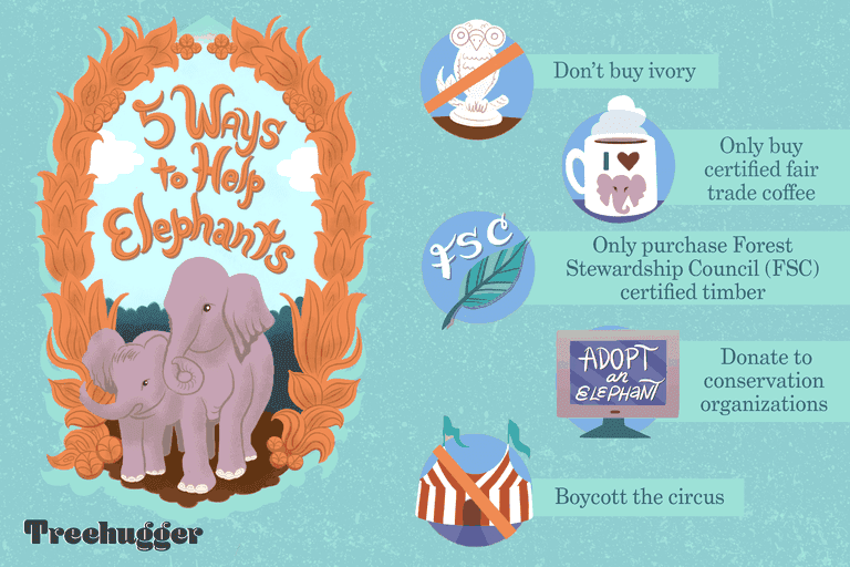 colorful illo showing 5 ways to help elephants