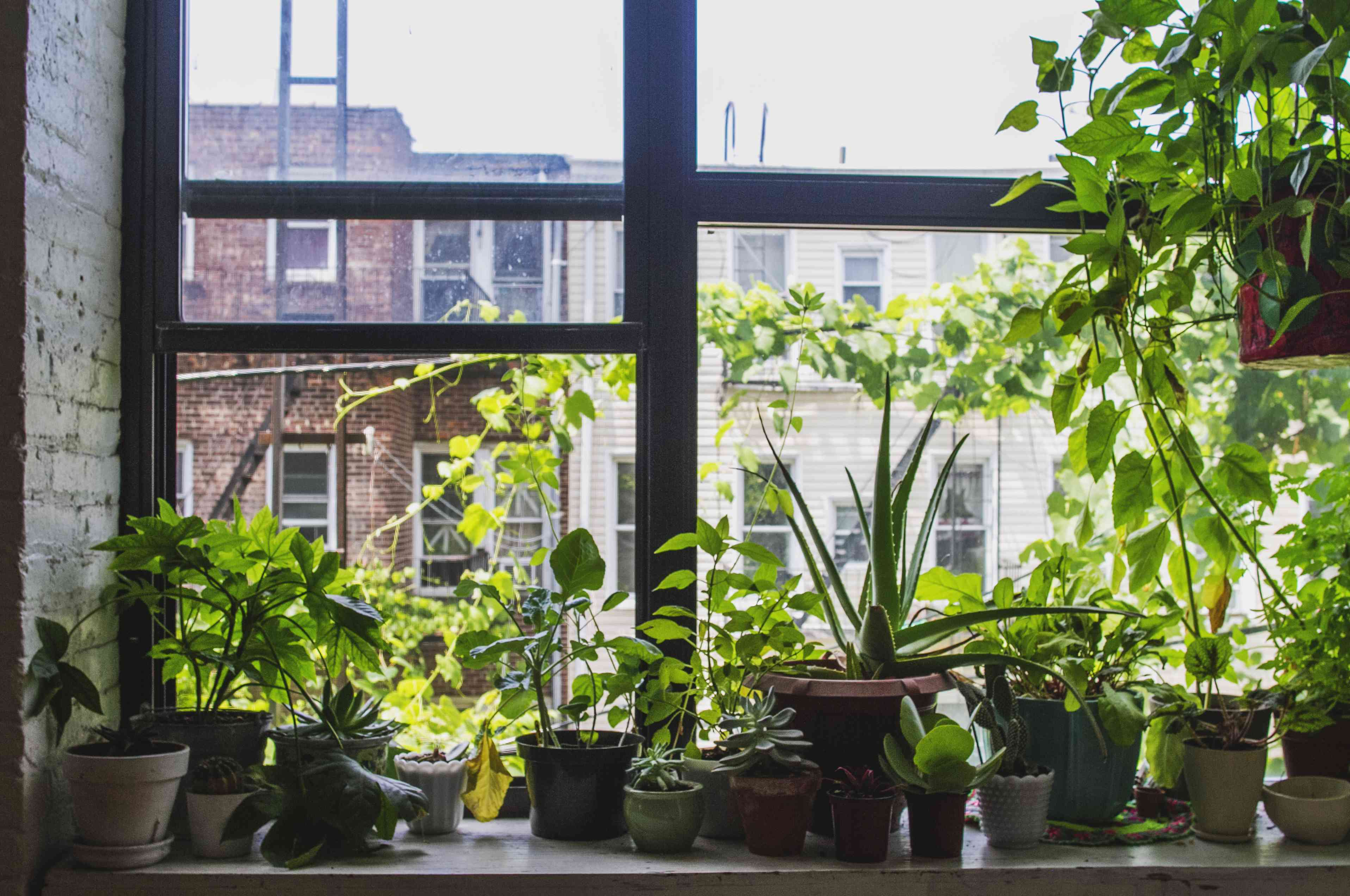 houseplants in a windowsill in Brooklyn, New York City