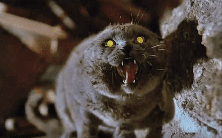 9 Exceedingly Creepy Cat Movies
