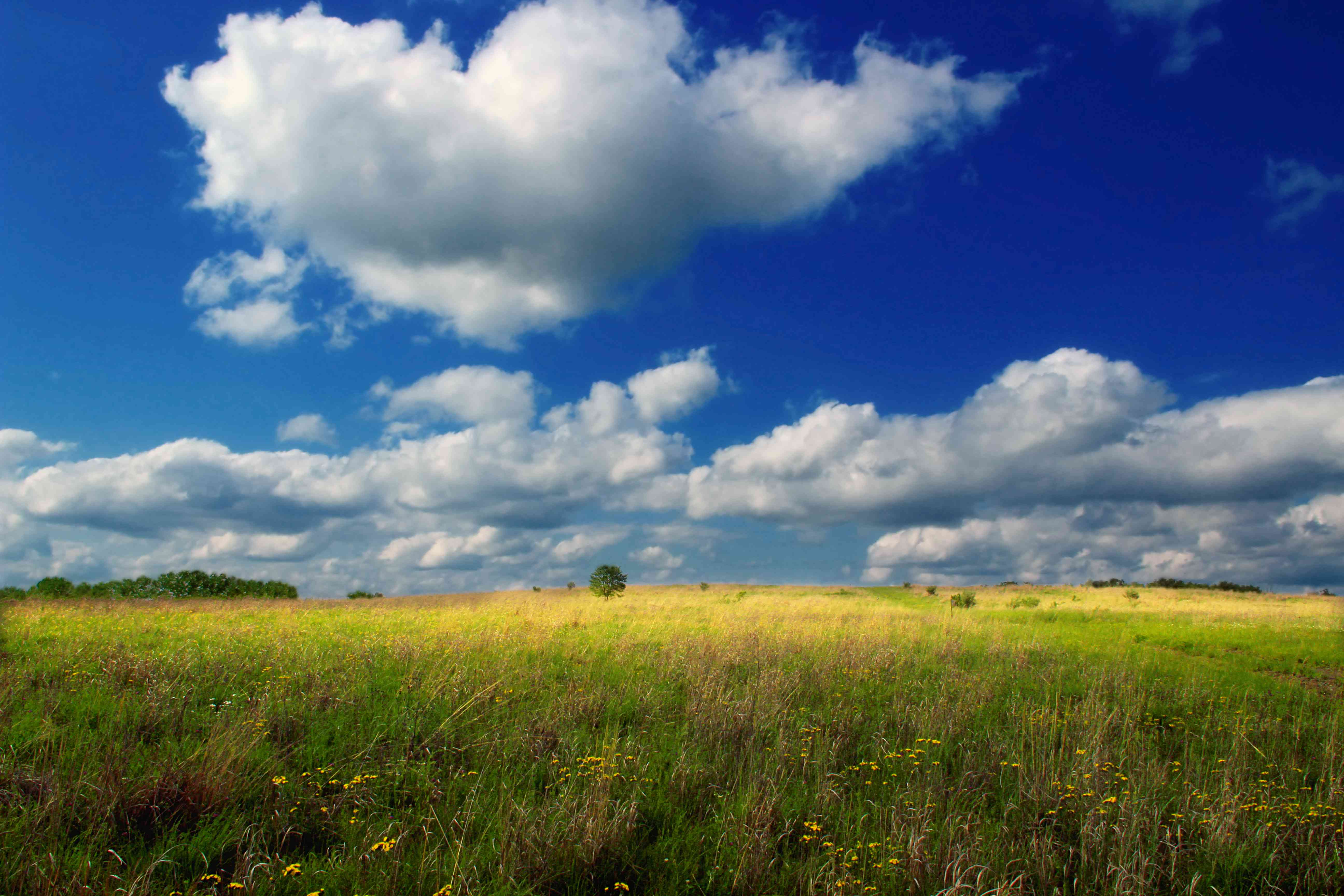 grassland in Centre County, Pennsylvania