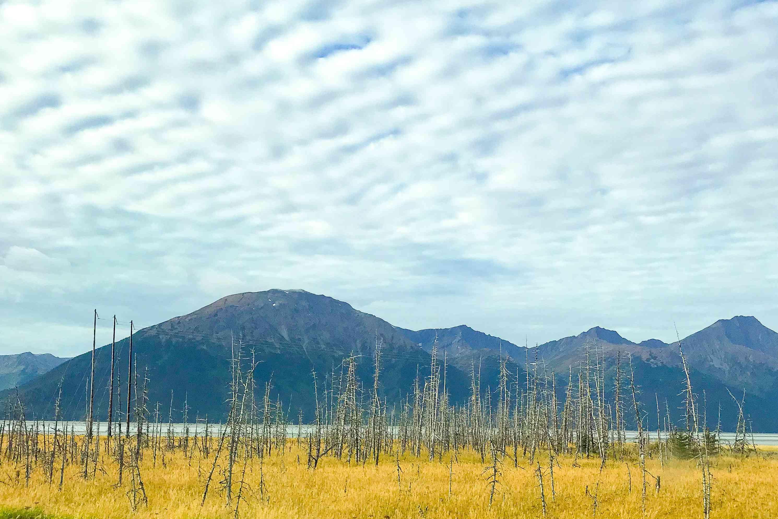 Girdwood ghost forest against a mountain backdrop in Alaska