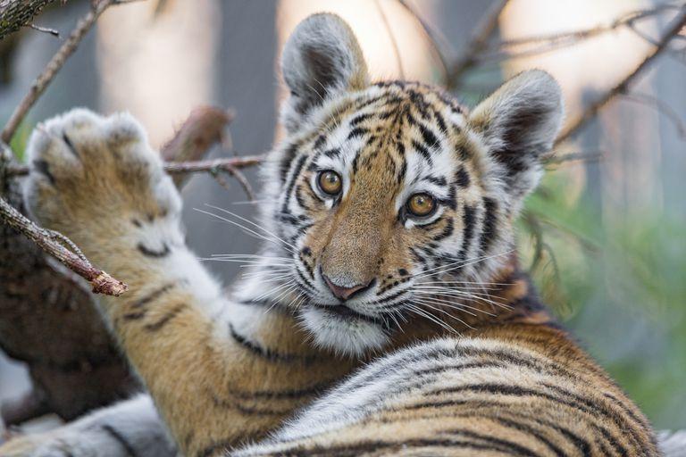 10 de las especies en peligro más lindas