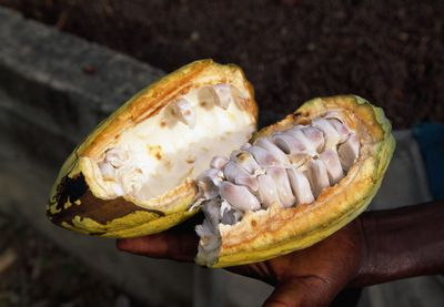 Cocoa Seeds within Cacao Fruit