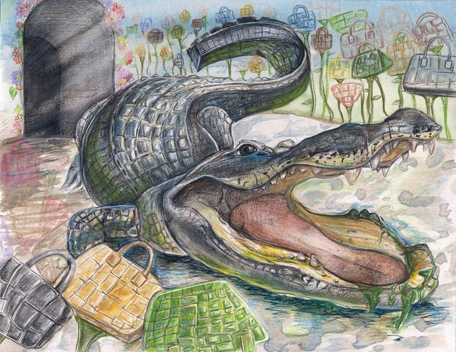 A colored-pencil drawing of an American alligator
