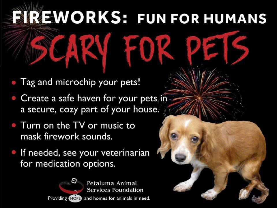scary for pets