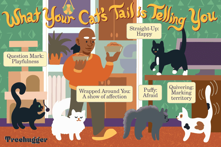 what your cat's tail is telling you illustration