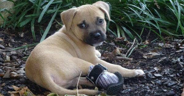 Mejorando la vida de los animales, una prótesis a la vez