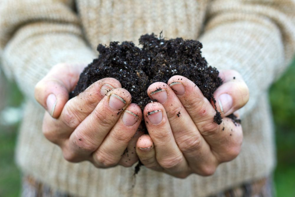 You can improve the quality of your soil in three to five years, but patience is key.
