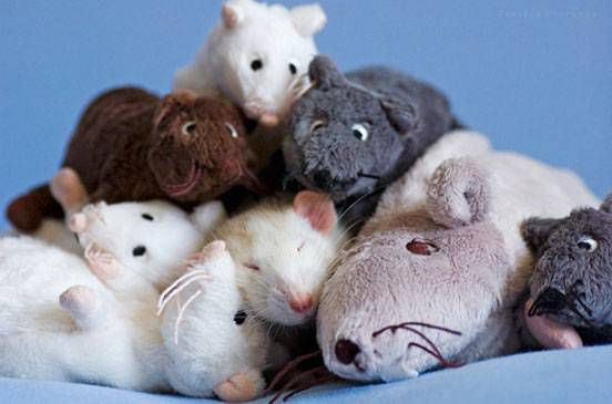 A rat sleeps in a pile of toy rats