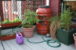Rain water barrel with hose attached, next to plants in planters on a patio