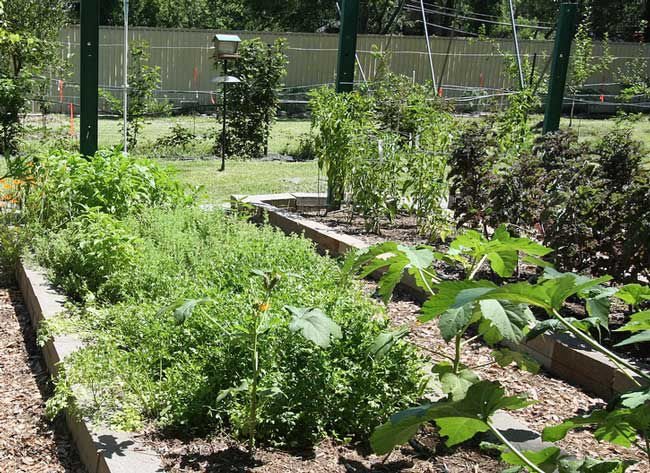 7 No-Cost Ways to Grow More Food From Your Garden