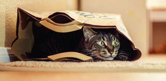A cat hiding in a paper shopping bag