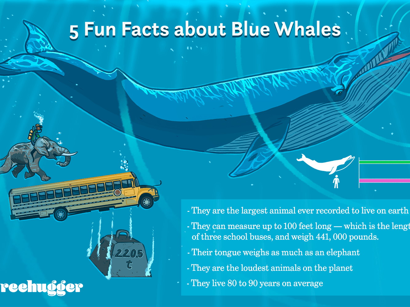 11 Facts About Blue Whales, the Largest Animals Ever on Earth