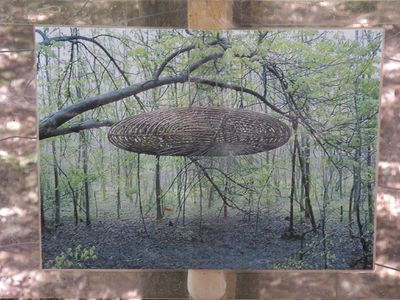 Photo of a work of art featuring woven branches in a forest