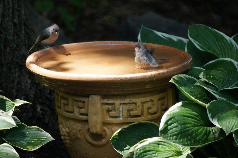 4 formas de regenerar tu jardín