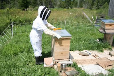 Beekeeper closing up the beehive