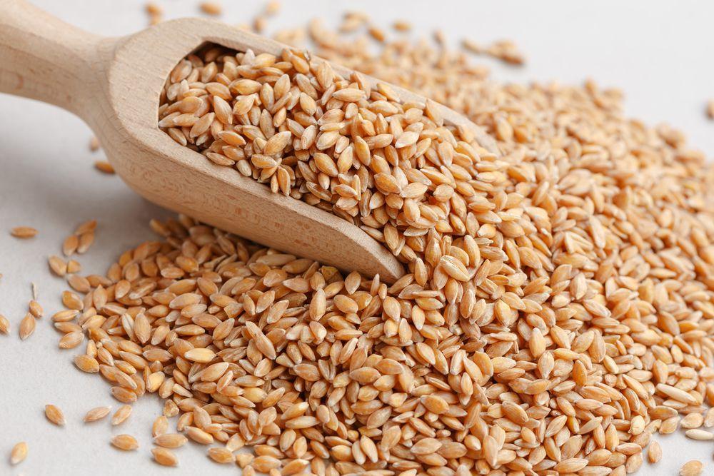 einkorn grains