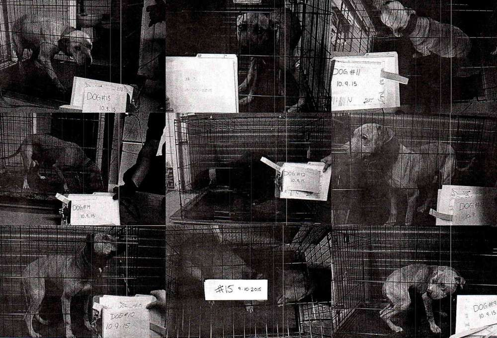 A poster showing pit bulls in custody