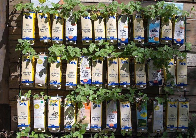 Pon en marcha un huerto escolar con cartones de leche y jugo reutilizados (y gana hasta $ 2500)