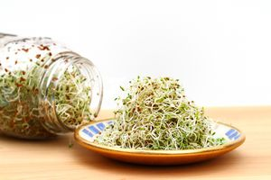 A heap of freshly grown organic alfalfa sprouts is piled on a small saucer. In the background is the sprouting jar with more sprouts