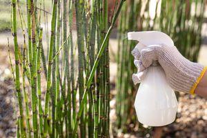 hand with reusable plastic spray bottle sprays bamboo