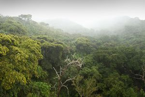 Tropical Rainforest Canopy