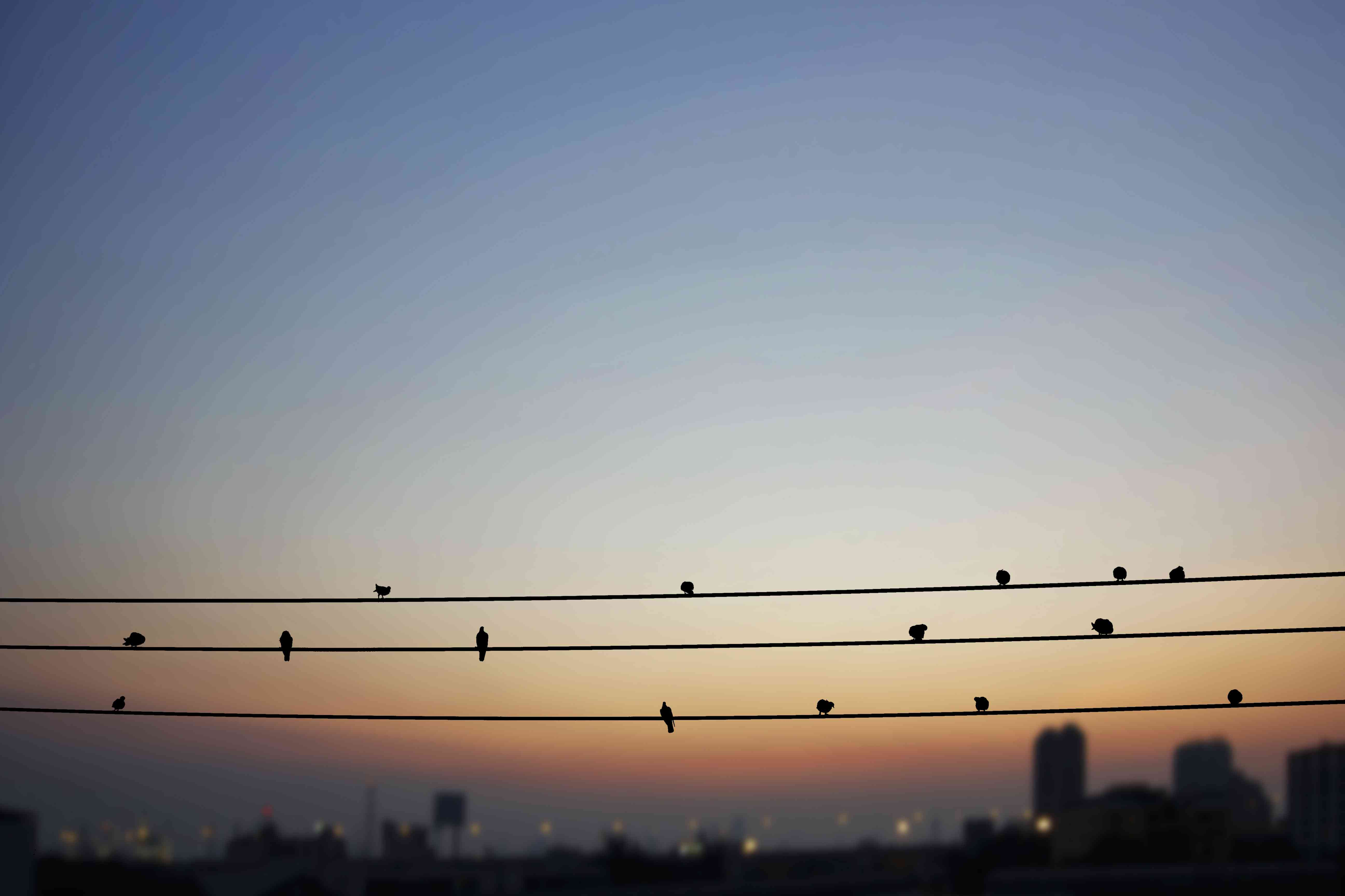 birds on a wire overlooking a city at twilight