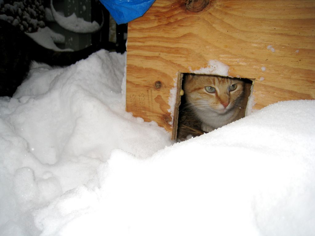A cat takes shelter from the snow.