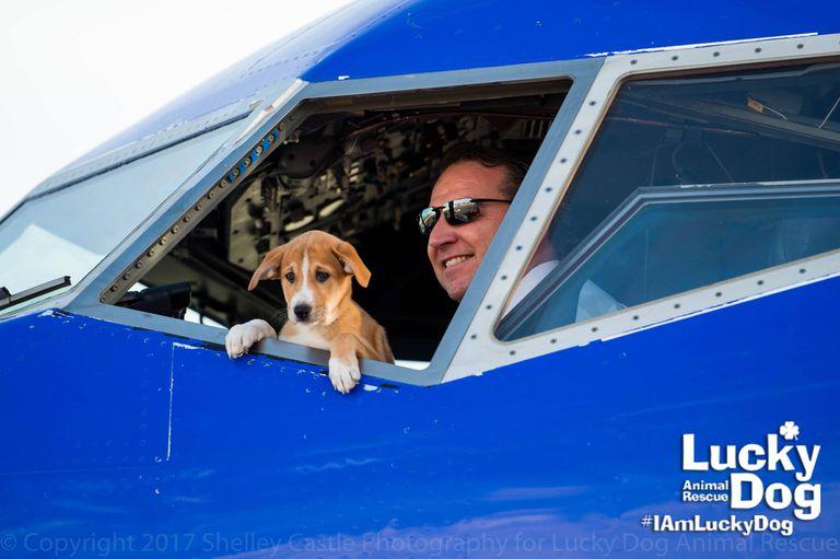 Para 62 mascotas sin hogar, este fue el viaje en avión de su vida