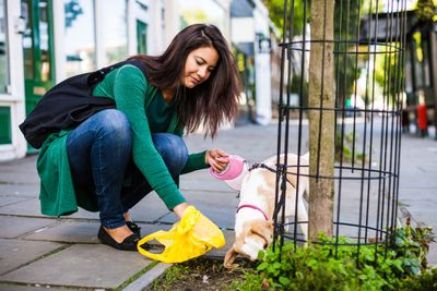 Woman picking up her dog's poop with bag on sidewalk