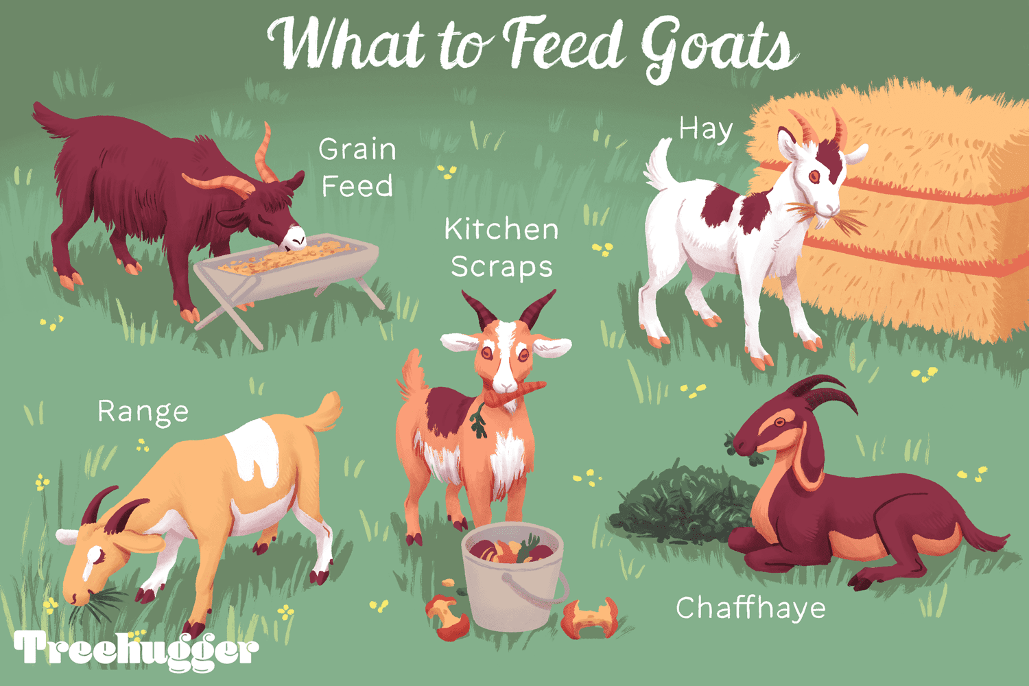 what is the standard diet for farm goats