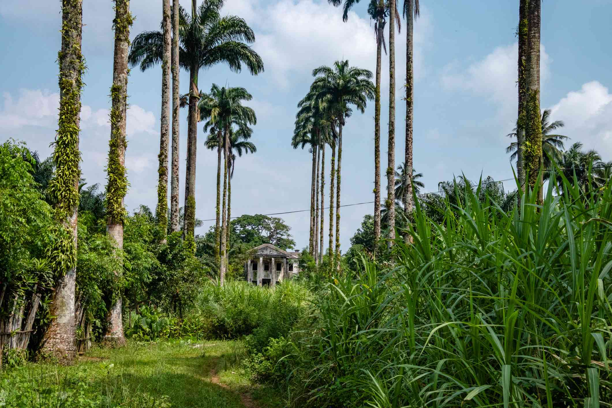 Ko Rural scenery of Kut Island (Koh Kood) - blue sky, dirt road and coconut palm trees