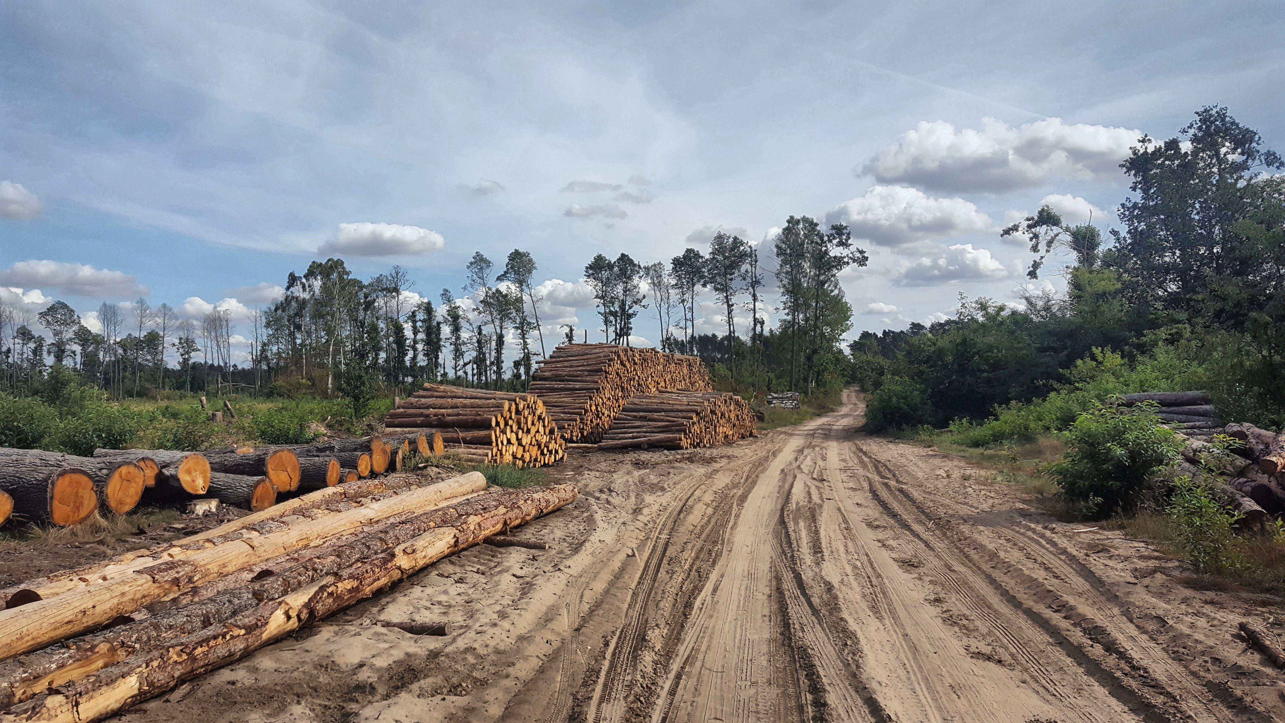 Deforestation  - cover