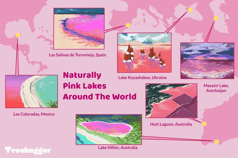 naturally pink lakes around the world illo