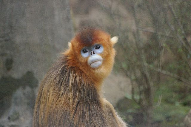 60% de las especies de primates ahora amenazadas de extinción