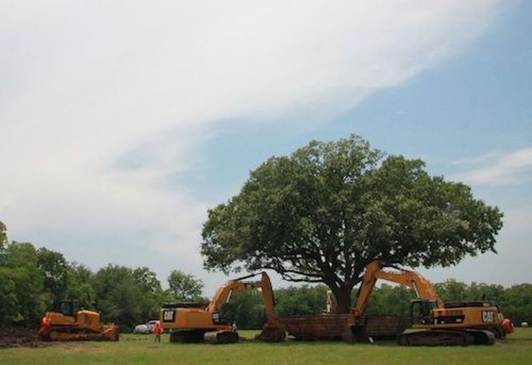 tree move photo