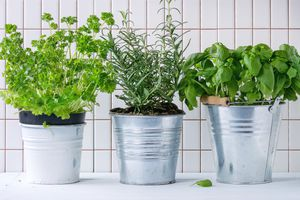 Close-Up Of Potted Plants On Table Against White Tiled Wall