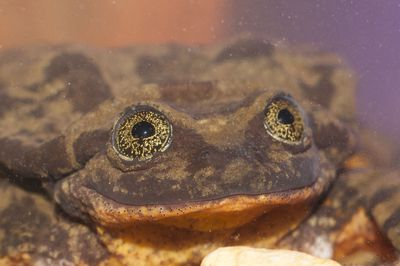 Bolivian Amphibian Initiative is making 10 expeditions to locations where the species was once common, hoping to find Romeo a female mate. And who wouldn't love that face?