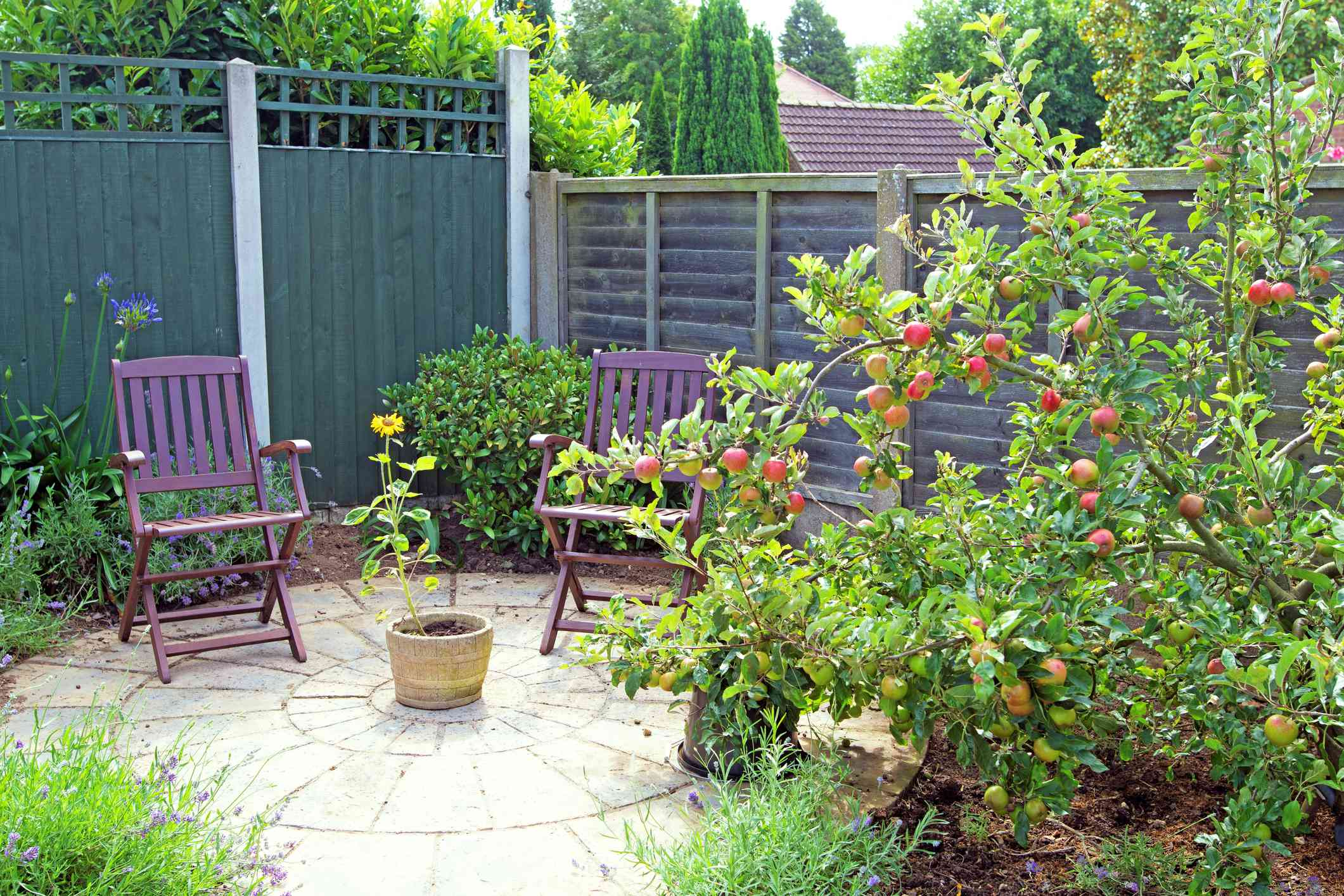 An apple tree in a small garden with a patio.