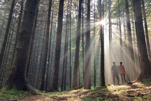 couple stand in sun rays piercing thick forest of tall trees