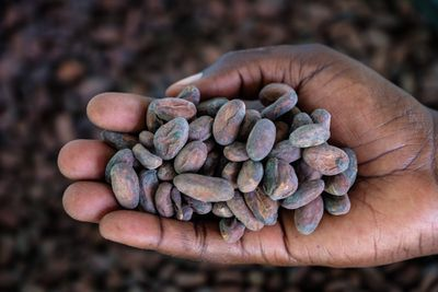cocoa beans in hand