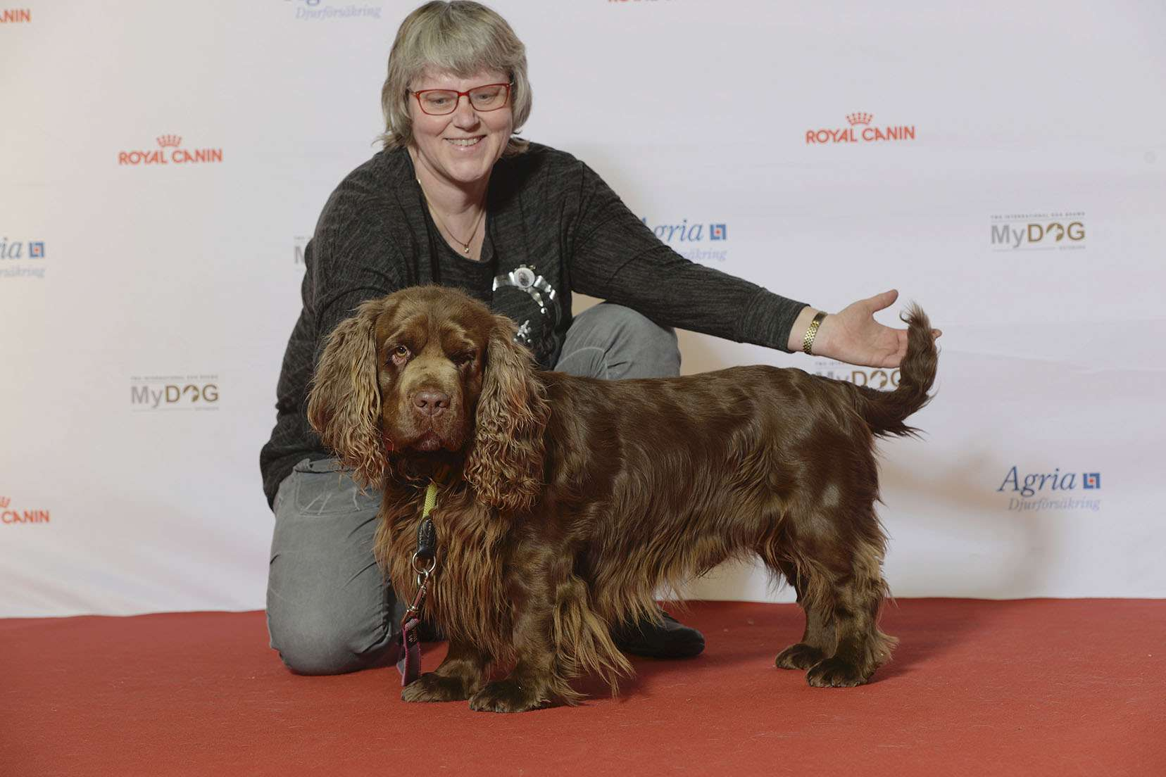 dog trainer poses with brown Sussex Spaniel on red carpet at dog show