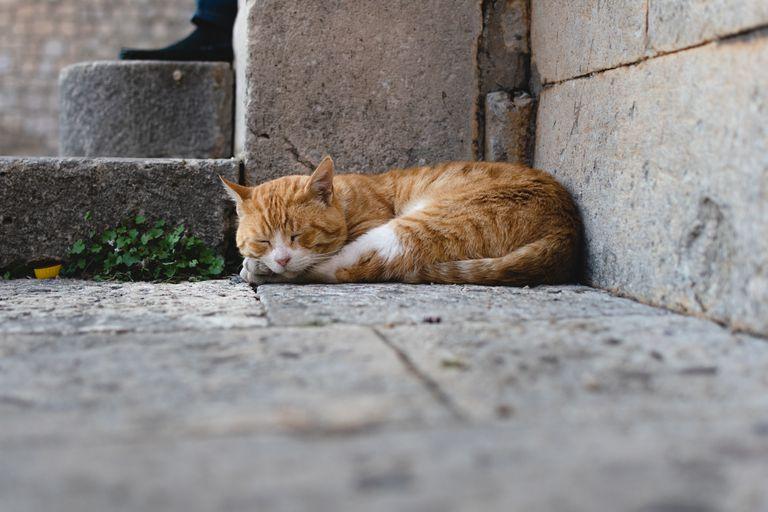 Stray Cat Sleeps by Stone Steps