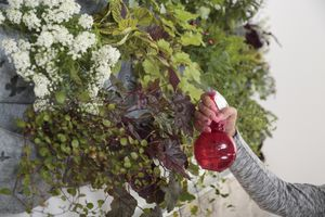 Woman spraying water on her living wall