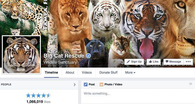 Big Cat Rescue on Facebook