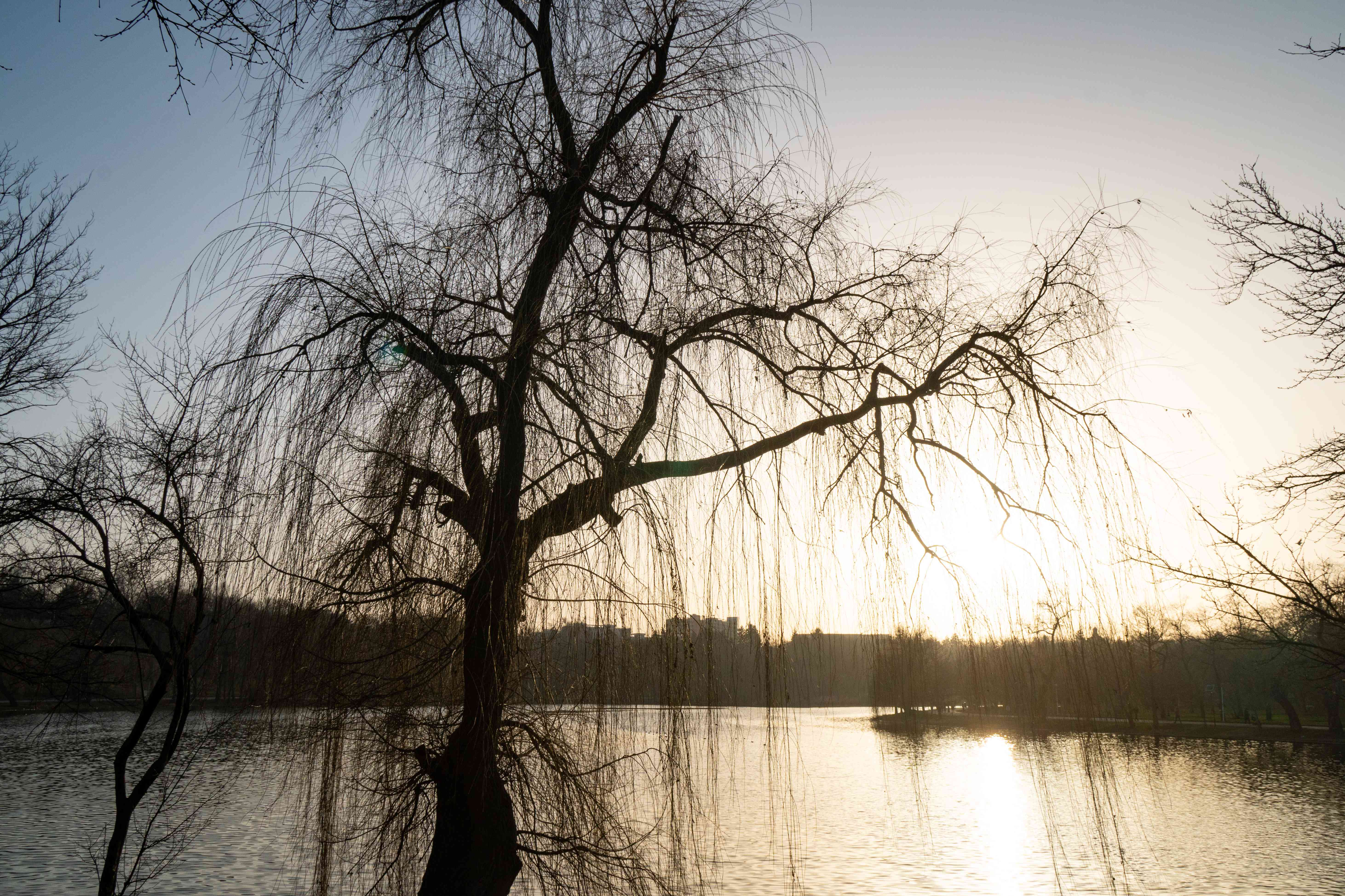 large barren tree at sunset during winter overlooking body of water