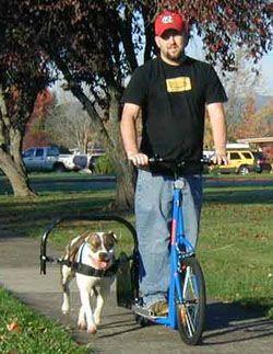 dog-scooter.jpg