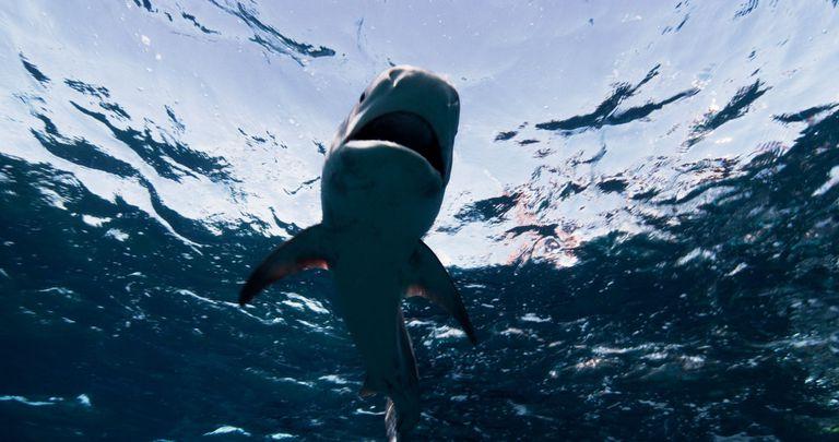 Um, ¿en serio? Pescador contratado para matar 20 tiburones después de los ataques