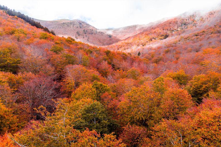 A red autumn landscape of deciduous trees.