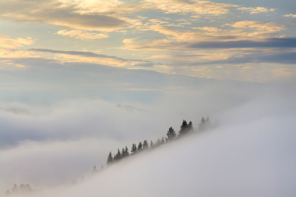 Fog is always a helpful character in minimalist landscapes.